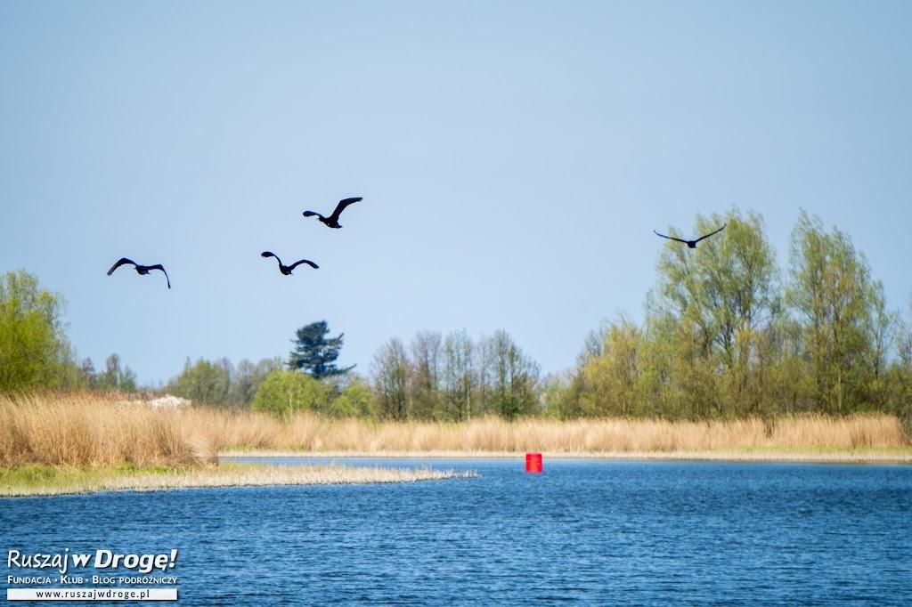 Dzikie ptaki nad Szkarpawą