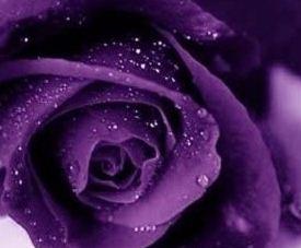 Purple Flowers Meaning House Beautiful House Beautiful