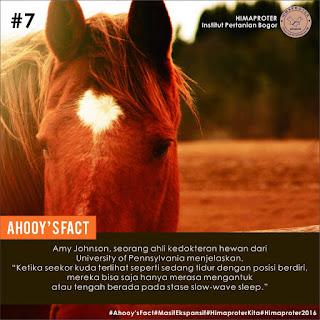 fakta Kuda Tidur sambil Berdiri