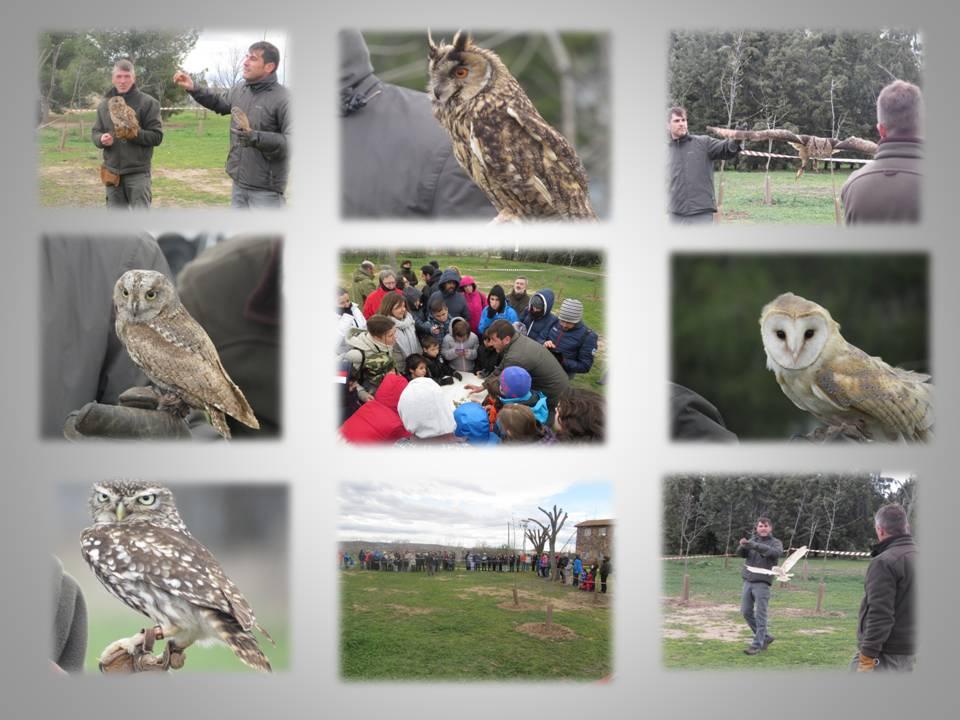 Presentación didáctica de Aves Rapaces, 7especies