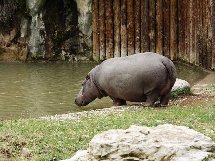 Reiseglueck Gardasee Bardolino travel Safari Park Parco Natura Viva Nilpferd Hippo