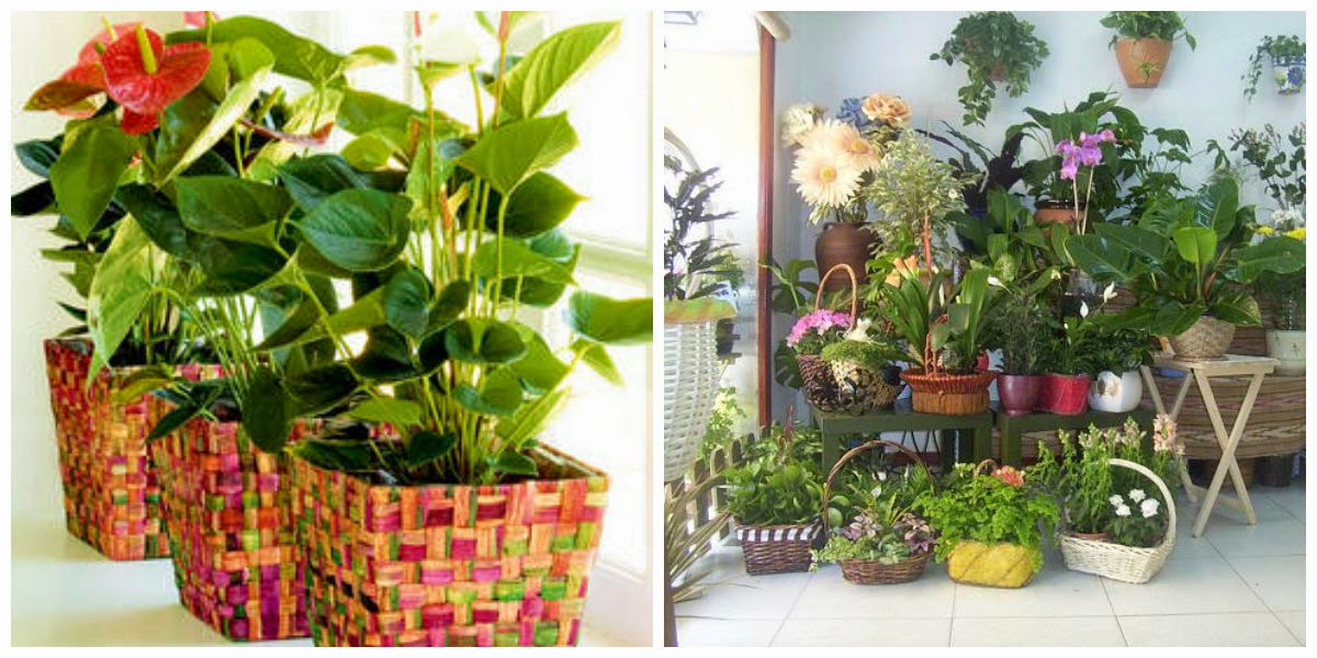 Dise a tu vida plantas para patios peque os - Como disenar un jardin exterior ...