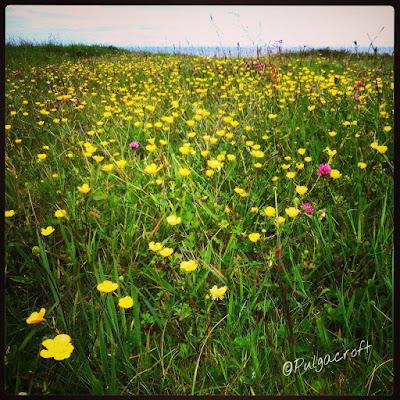 FlowerPower_©SandraSanchez