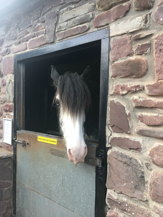 shire-horse-putting-head-through-stable-door-boy-in-micralite-festival-fastfold-stroller-at-dan-yr-ogof