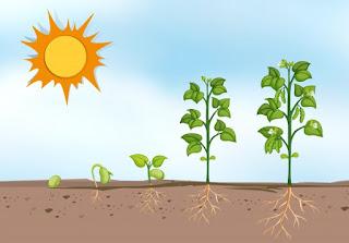 Tumbuhan MEngalami Pertumbuhan