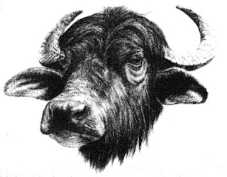 Arriva il cappuccino con Latte di Bufala, dal 28 Ottobre nei bar di Frosinone e del Lazio