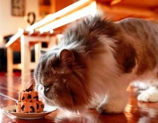 Resep Makanan Kucing Buatan Sendiri dan Cara Membuatnya
