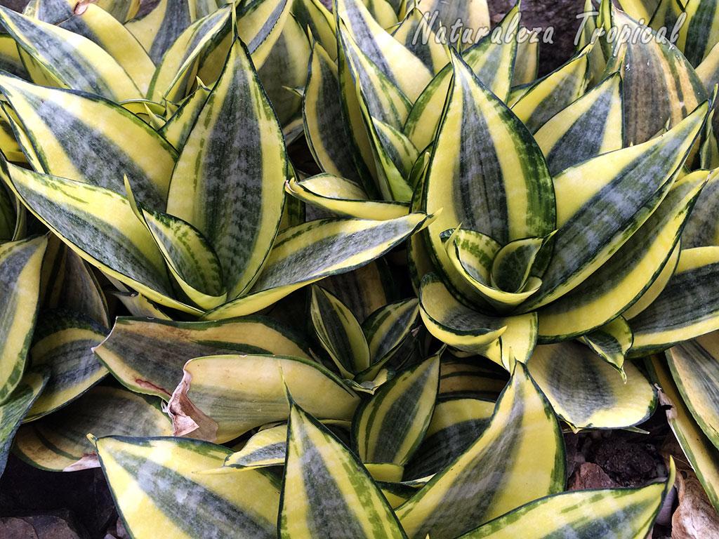 Naturaleza tropical 6 razones por la que debemos cultivar - Plantas de interior purificadoras del aire del hogar ...