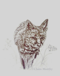 British wildlife illustration of a fox