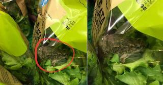 Βρέθηκε βάτραχος μέσα σε σαλάτα γνωστής ελληνικής αλυσίδας σούπερμαρκετ