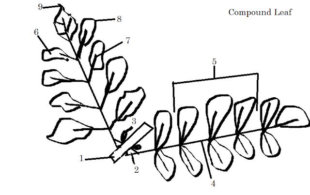Eubacteria And Archaebacteria Venn Diagram Comparison