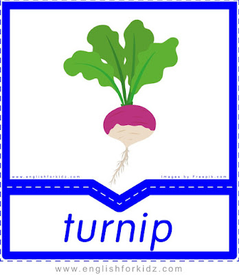 Turnip - English flashcards for the fruits, vegetables and berries topic