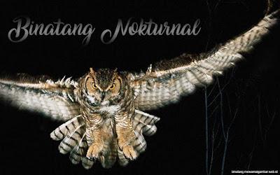 pengertian dan contoh binatang nokturnal