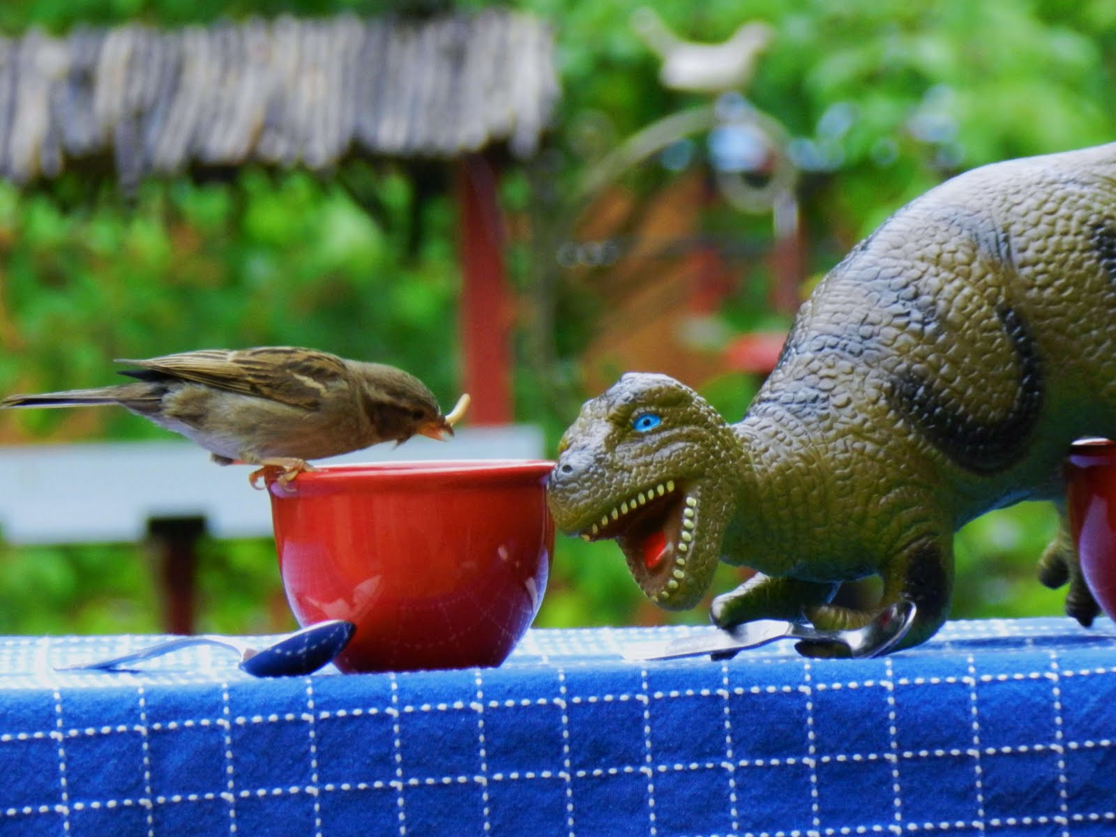 Minneapolis Backyard Birds - Jeanasina's Crazy Stuff ...