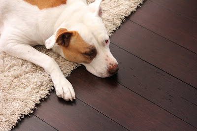 Most Durable Flooring For Pets