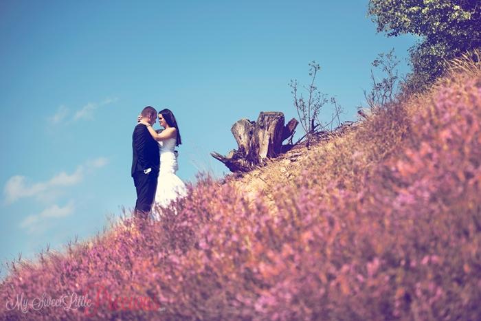 sesja ślubna na wrzosowisku