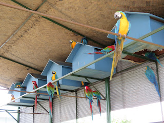 Macaw Land