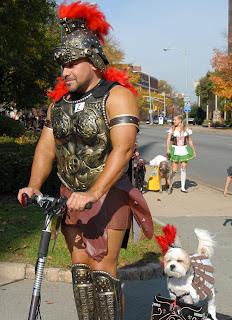 Perro gladiador.