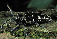 http://www.top10-facts.com/2018/03/asian-long-horned-beetle.html