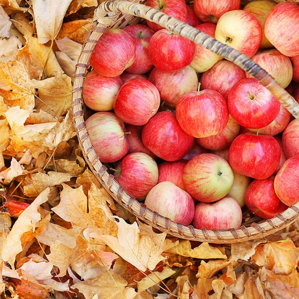 A basket of fallen apples this autumn - Hello October! Come on over and discover 25 things to do this October!! Make Crockpot Cider. This image is a fabulous example of all that is lovely about Fall/Autumn. I love that I live in a world where there are seasons! The red apples and cinnamon sticks are perfect scents for the season.