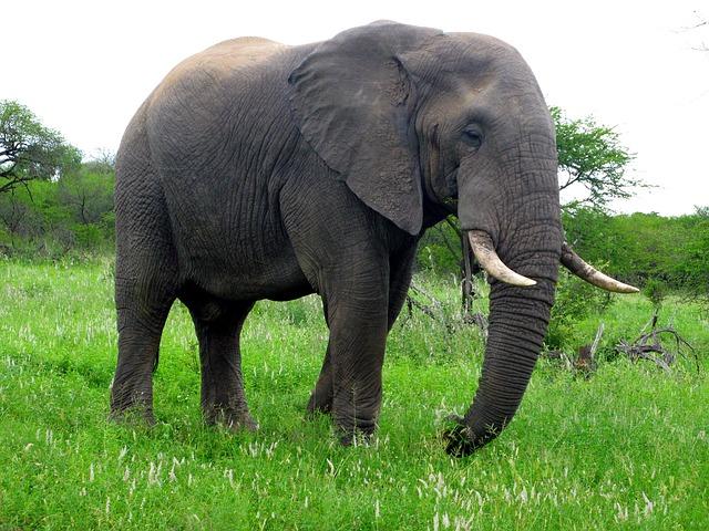 56 Gambar Fauna Indonesia Bagian Barat Dan Penjelasannya