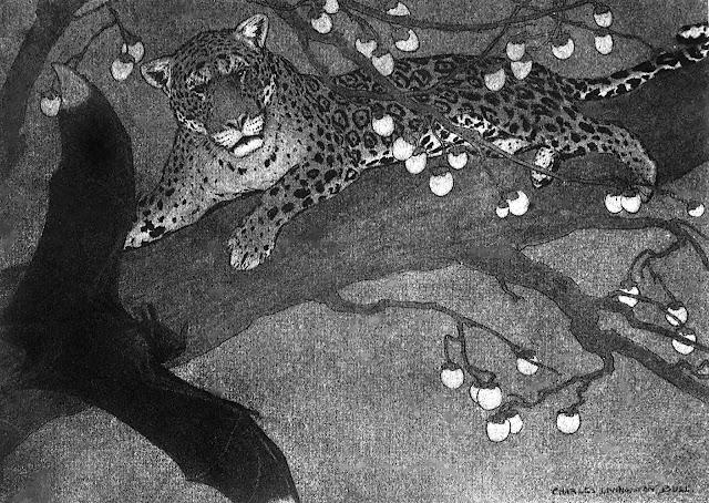 Charles Livingston Bull, jungle leopard illustration