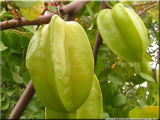 Carambola (Averrhoa carambola) asian fruit images