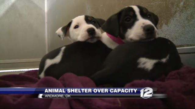 Ardmore Animal Shelter over capacity