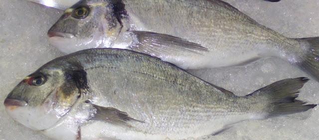 Εύβοια: Η θάλασσα γέμισε τσιπούρες – Σε πελάγη ευτυχίας οι ψαράδες – Ποια είναι η εξήγηση;