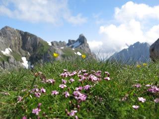 Rückblick zur Westlichen Karwendelspitze