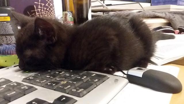 Caturday #2 - Katze müsste man sein...