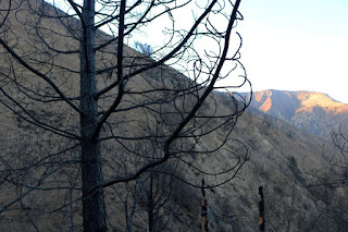 Fish Fire damage along Van Tassel Fire Road with Van Tassel Ridge in the background, Azusa, June 30, 2016