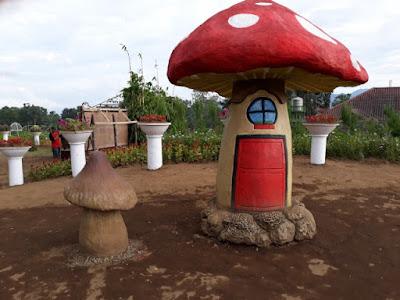 rumah jamur taman bunga celosia