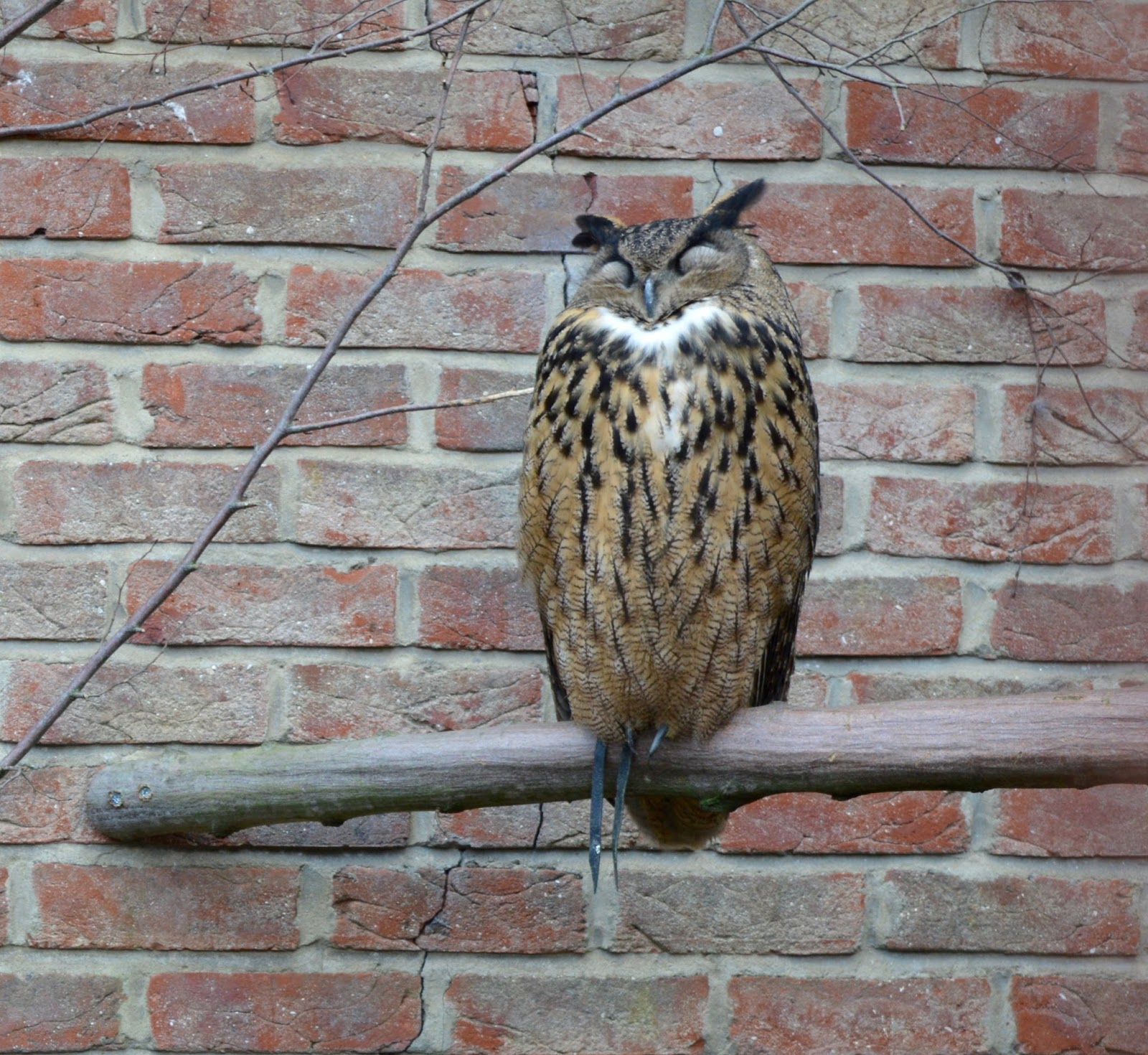 Visiting Angry Birds Activity Park at Lightwater Valley, North Yorkshire - Eagle Owl Birds of Prey