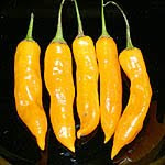 aji golden