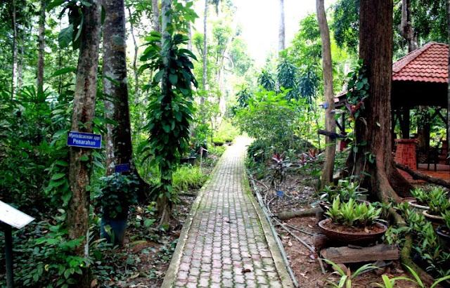 Pelbagai herba, rempah dan tumbuh-tumbuhan tradisional yang berjumlah lebih daripada 1000 spesies ditanam di sini.