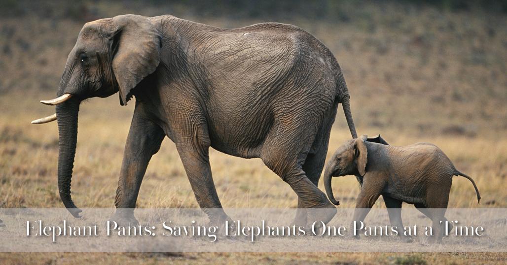 Elephant Pants: Saving Elephants One Pants at a Time