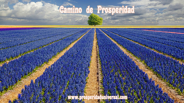 https://www.prosperidaduniversal.org/atraccion-de-prosperidad/yo-soy-prosperidad/camino-atraccion/