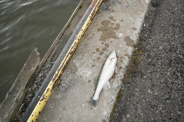 Kalastusta Kalasataman kulmilta