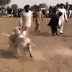 Bloody Dog Fight In Pakistan (Video)