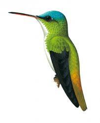 andean birds