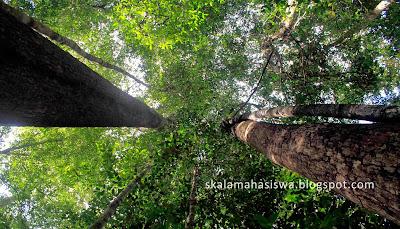 lapangan kerja lulusan manajemen hutan