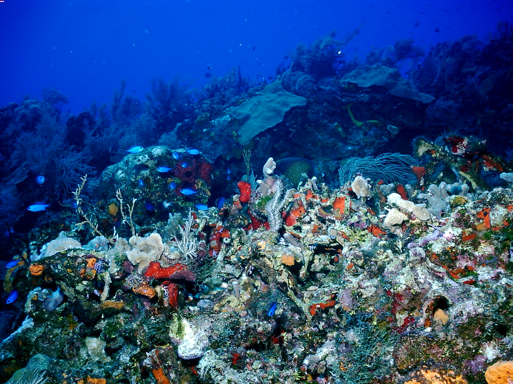 My Background Blog Coral Reef Background