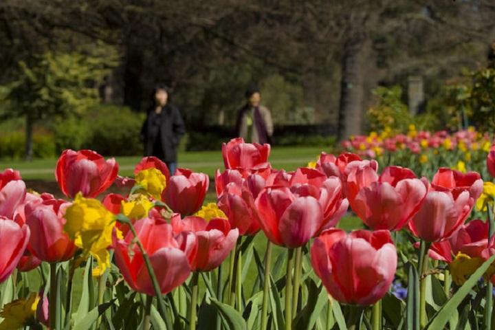 Kawasan-Christchurch-Botanic-Gardens-Selandia Baru