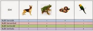 Ciri Ciri Hewan Vertebrata Dan Invertebrate Beserta Contohnya