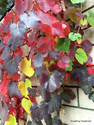 Vitis 'Roger's Red' with something like V. 'Walker Ridge'.  A beautiful pairing of colors