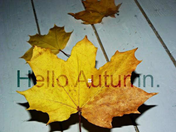 Ten reasons why autumn is the best season!