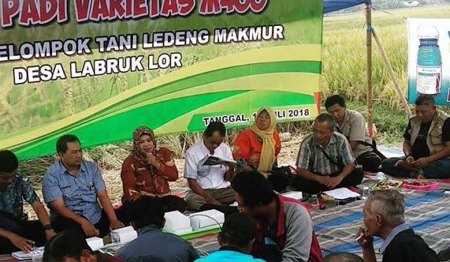 Temu lapang petani di Desa Labruk Lor Kecamatan Lumajang
