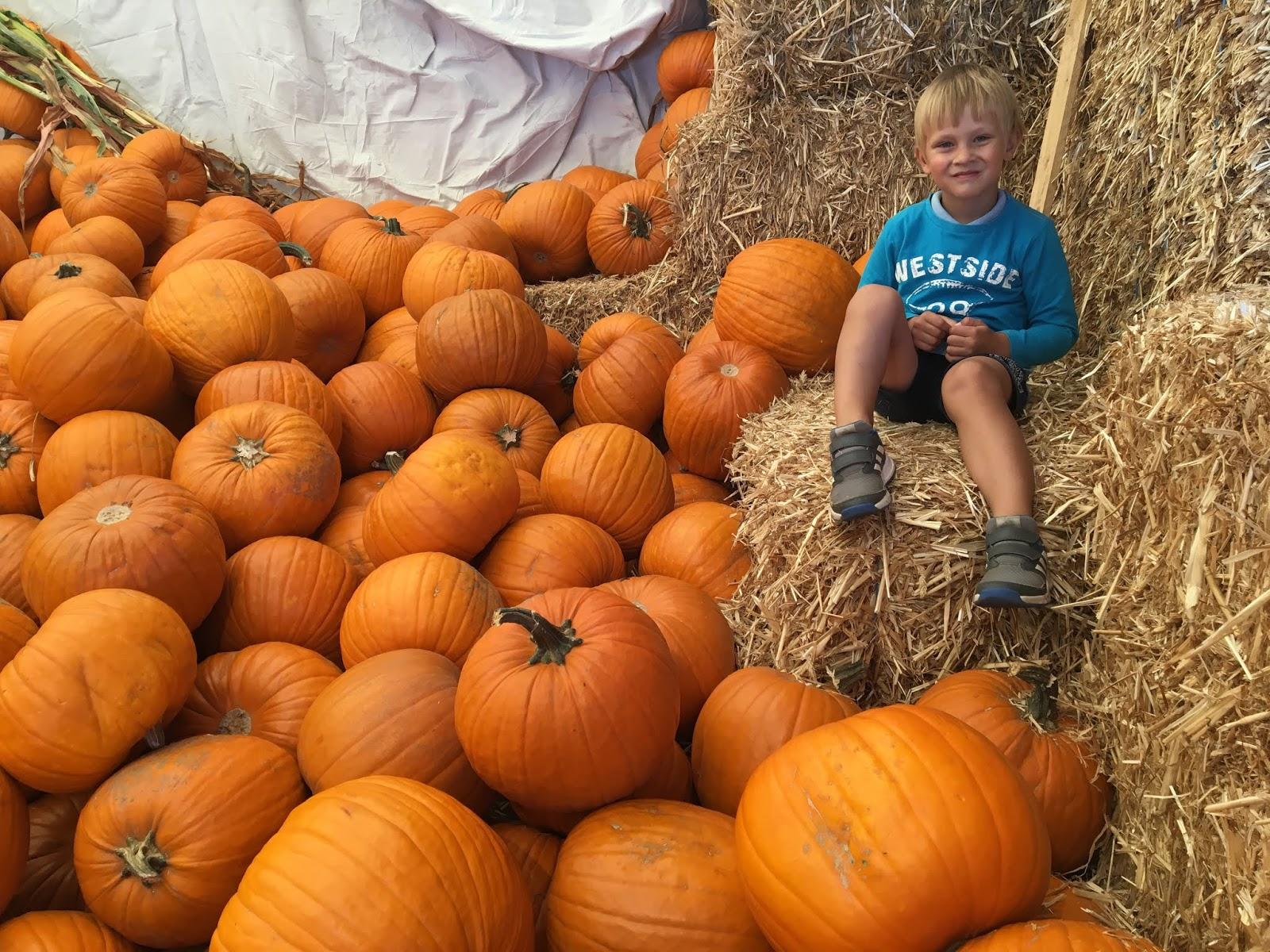 004bee69152 Oktoobri lõpus sai meie Riku 4-aastaseks ja tähistasime ka esimest korda  Halloween'i. Lõikusime ka paar kõrvitsat 'koledaks'. 31. oktoober algas  lasteaias ...