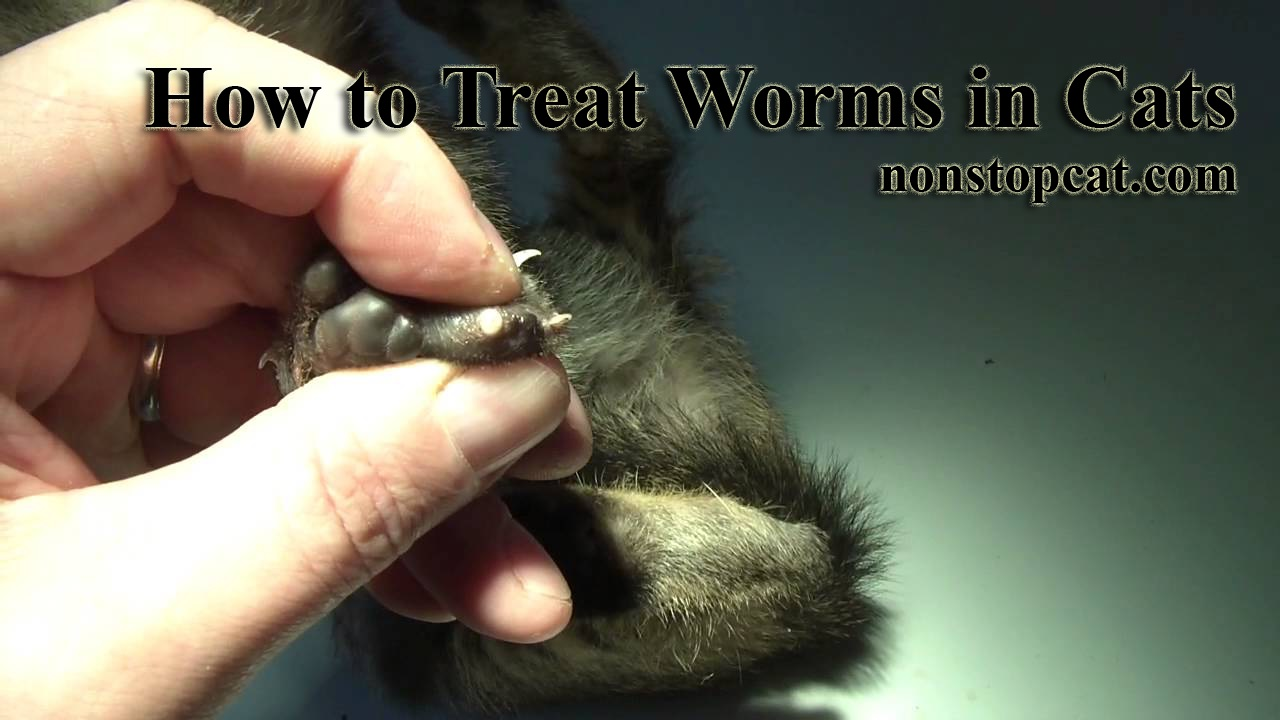 How to Treat Worms in Cats